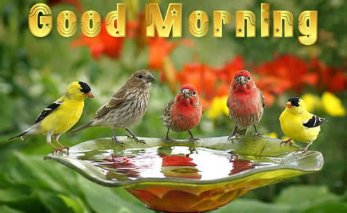 Happy Good Morning HD Images.jpg